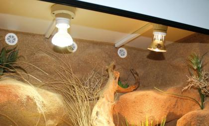 Forex terrarium selbst bauen