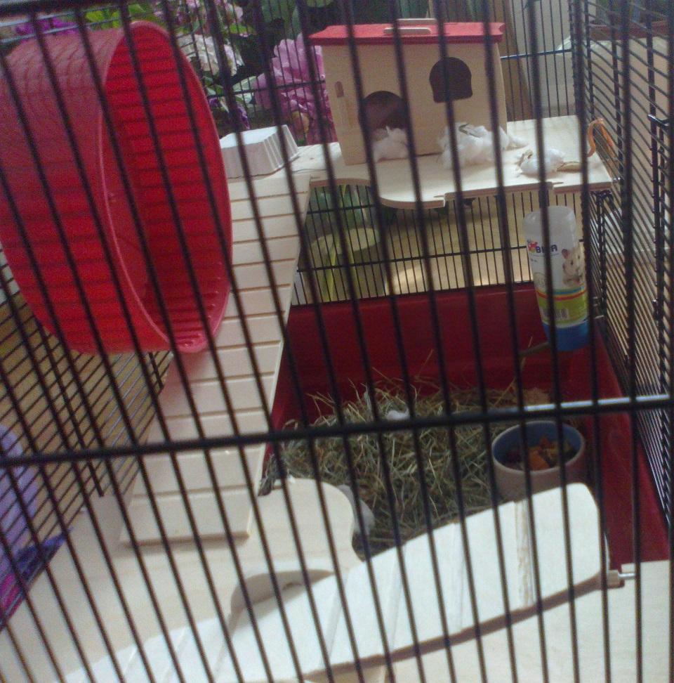 Hamster Zu Verkaufen