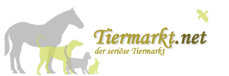 Tiermarkt.net - Der seriöse Tiermarkt für alle Tierarten